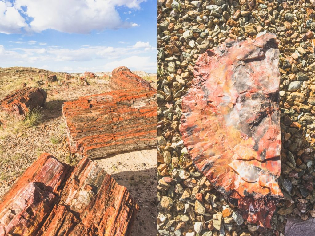 Parki narodowe USA - Petrified Forest National Park